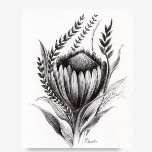 Downloadable Printable Art Gift, a Protea Botanical Flower Pen Drawing in Sizes A5, A4 and 8 x 10 inches