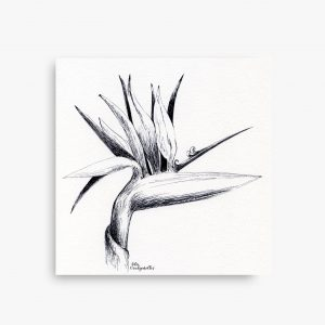 Downloadable Printable Art Gift, a Strelitzia Botanical Flower Pen Drawing in Sizes A5, A4, 8 x 10 and 12 x 12 inches