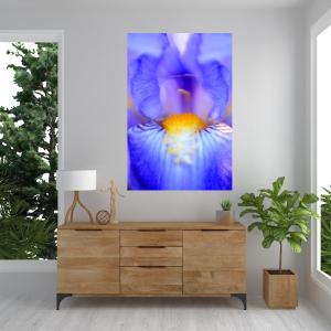 """""""Iris"""" A2 Size Fine Art Print"""